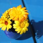 Mit Gelb-Orange auf Blau ins Wochenende.