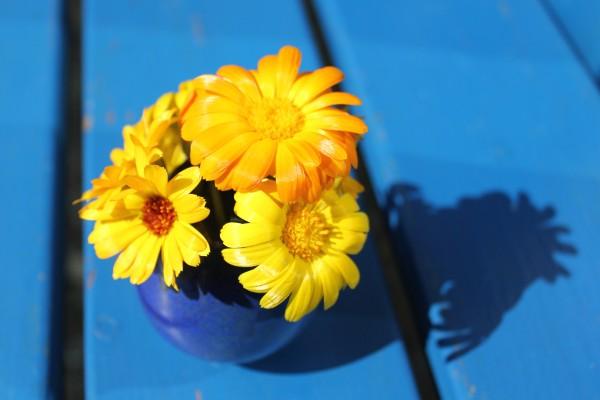 Ringelblumen zum Flower Friday